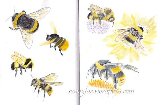bumble bee sketches 2