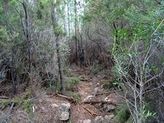 Le chemin entre le ravin de Figa et les vasques du Finicione