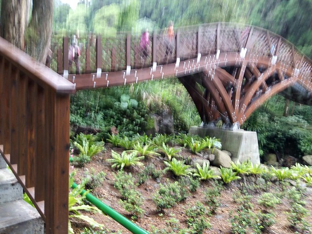溪頭新建的銀杏橋 (17)
