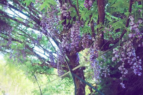 Jardin floral d'Apremont sur Allier (15)
