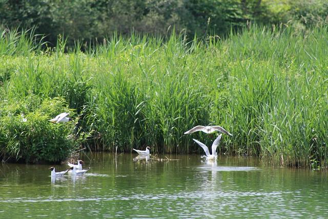 #WithNature #GENeva Réserve Naturelle du Delta de la Dranse