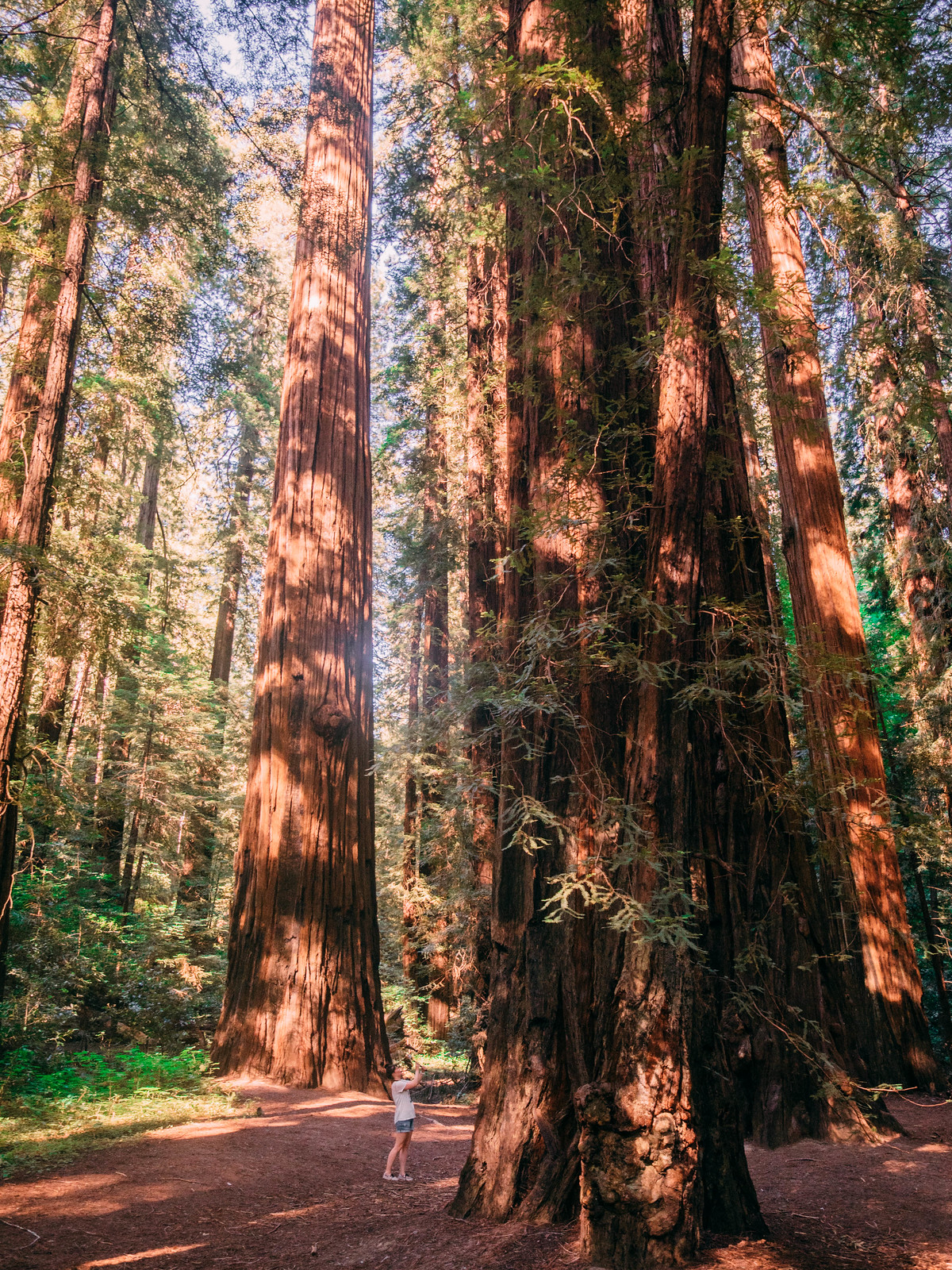 Redwoods-11