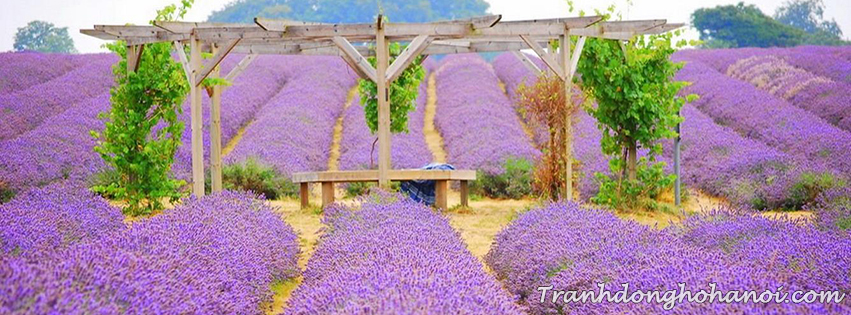 Dowload cover facebook lavender flower