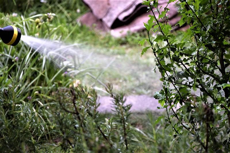 Watering the Garden 31.05.2017