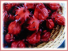 Recently harvested fruits of Hibiscus sabdariffa (Roselle, Rosella, Red/Indian/Jamaican Sorrel, Florida Cranberry), 20 May 2017