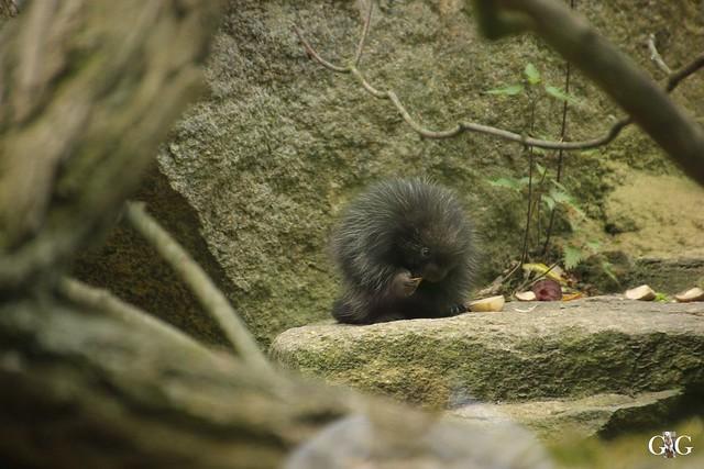 Tierpark Friedrichsfelde 25.05.176