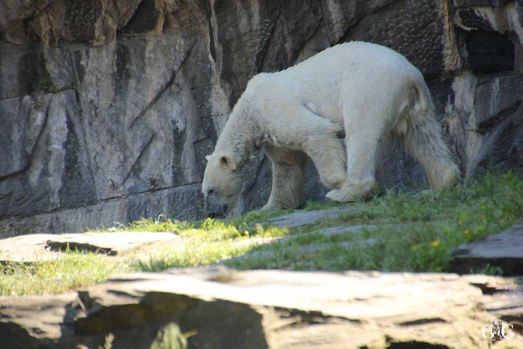 Tierpark Friedrichsfelde 28.05.174