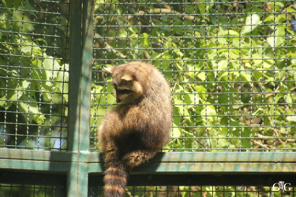 Tierpark Friedrichsfelde 28.05.1718