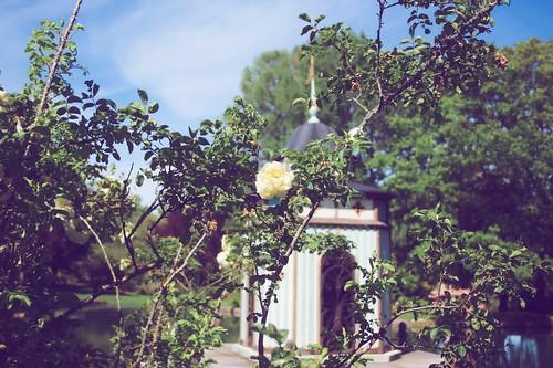 Jardin floral d'Apremont sur Allier (7)