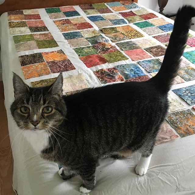 Nope. Off the bed and locked out of the room now. 😿