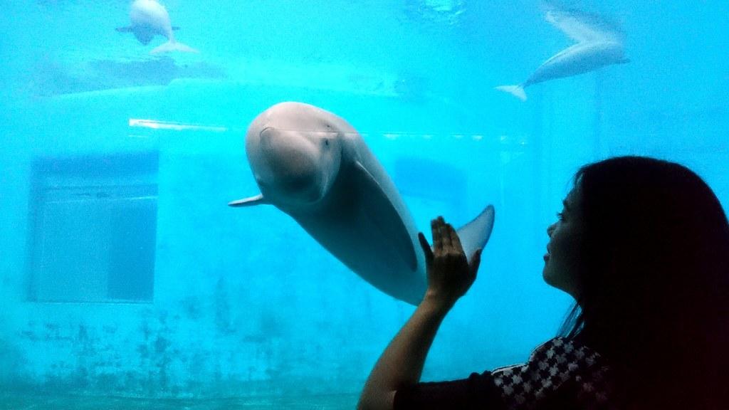 水生所飼養的江豚相當親人,對職員與訪客皆相當好奇。