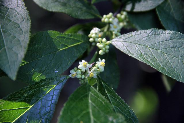 20170611_WV_Botanic_Garden_013