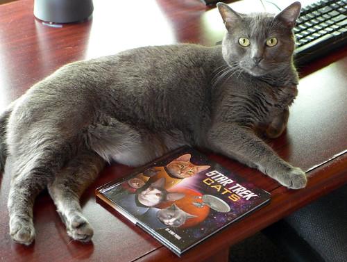 2017-06-14 - Star Trek Cats - 0001 [flickr]