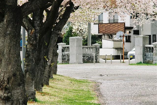 Sakura Storm
