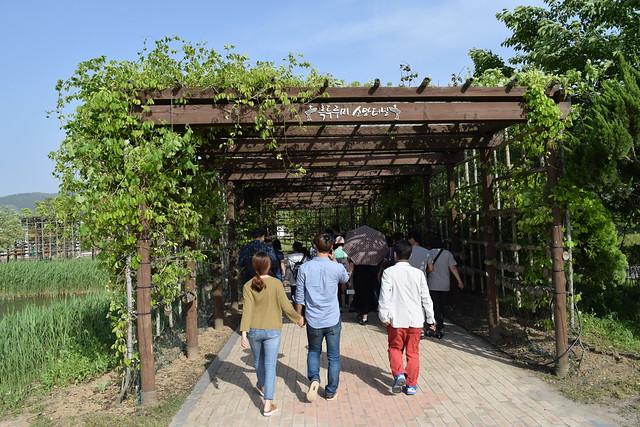 Suncheon Bay Wetland (3)
