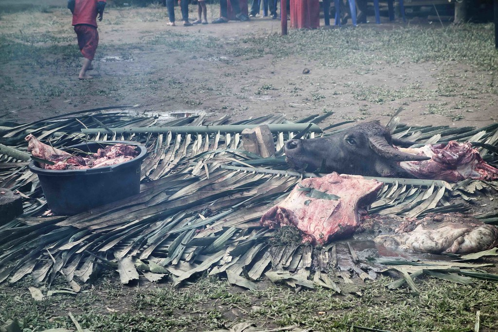 Rantepao - Ceremonie - Viande