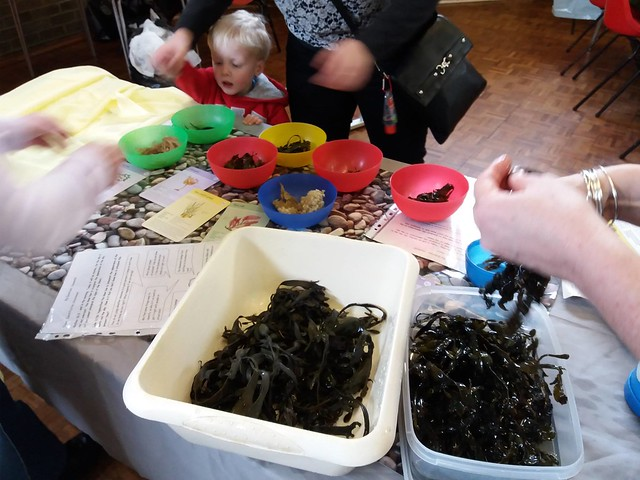 Seaweeds activity from chapter 6 of Messy Church Does Science