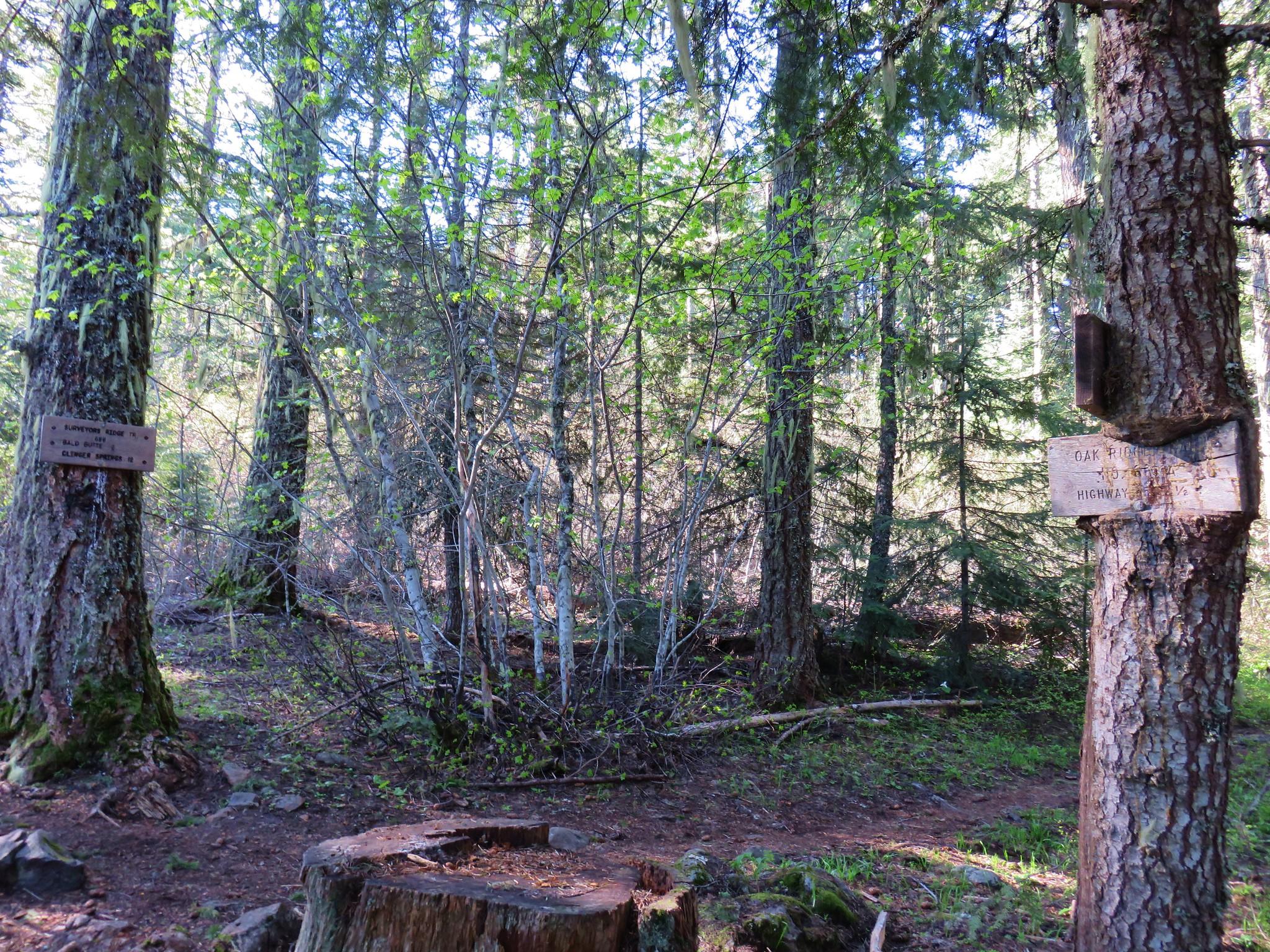 Oak Ridge Trail and Surveryor's Ridge Trail junction