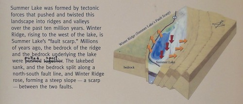 "Image shows a portion of an information sign. To the left is printed matter reading, ""Summer Lake was formed by tectonic forces that pushed and twisted this landscape into ridges and valleys over the past ten million years. Winter Ridge, rising to the west of the lake, is Summer Lake's ""fault scarp."" Millions of years ago, the bedrock of the ridge and the bedrock underlying the lake were pushed together (this is struck through and ""pulled apart is written above in black Sharpie). The lakebed sank, and the bedrock split along a north-south fault line, and Winter Ridge rose, forming a steep slope - a scarp - between the two faults."" To the right is a diagram of the area with arrows showing the movement of the fault. The arrows clearly show that the two sides pulled in opposite directions, and the center dropped down."