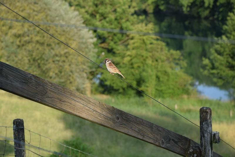 Sparrow 11.06 (4)