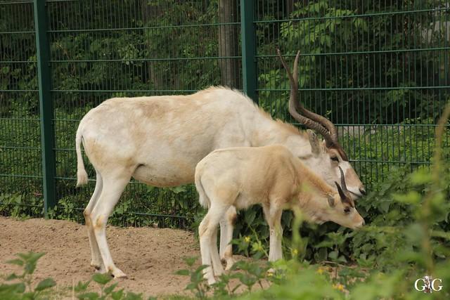 Tierpark Friedrichsfelde 25.05.1765