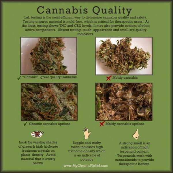 Cómo identificar el cannabis de calidad #infografía