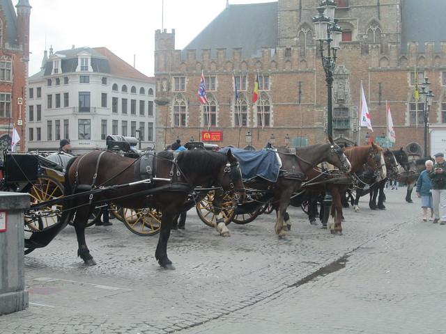 Square  in Bruges horses