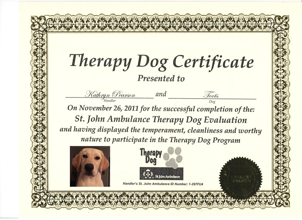 Fake Therapy Dog Certification This Was Similar To The Van Flickr