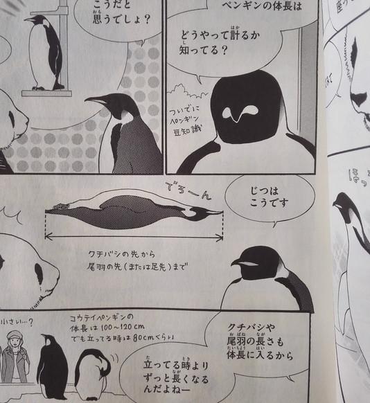 ペンギンは首も伸ばしたら体調長い