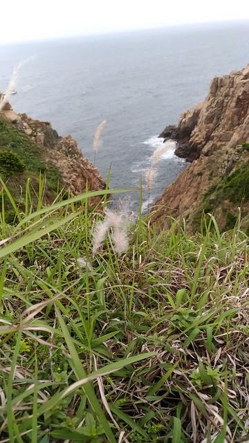 東洋山的花