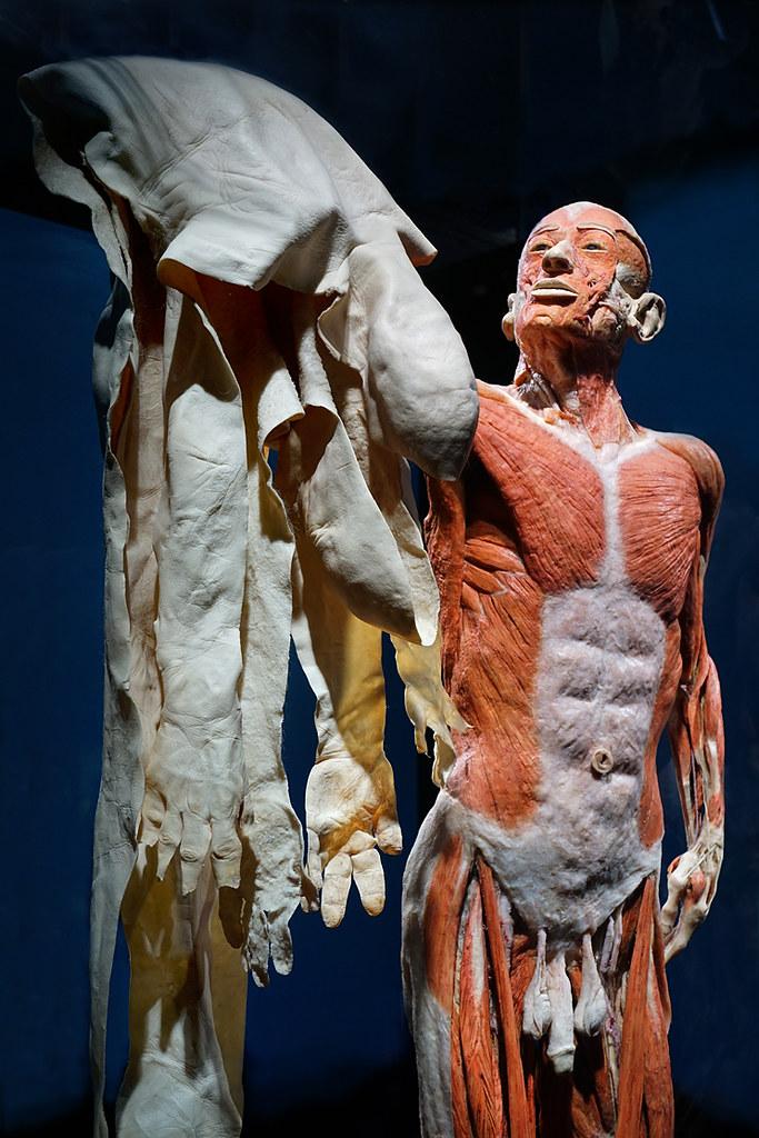 Skin Suit Los Angeles Ca California Science Center Ple Flickr