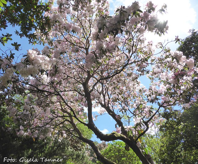 Glenarn Garden 1