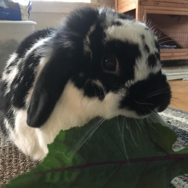 Kohlrabi leaves are a 10/10. 🐰🌿