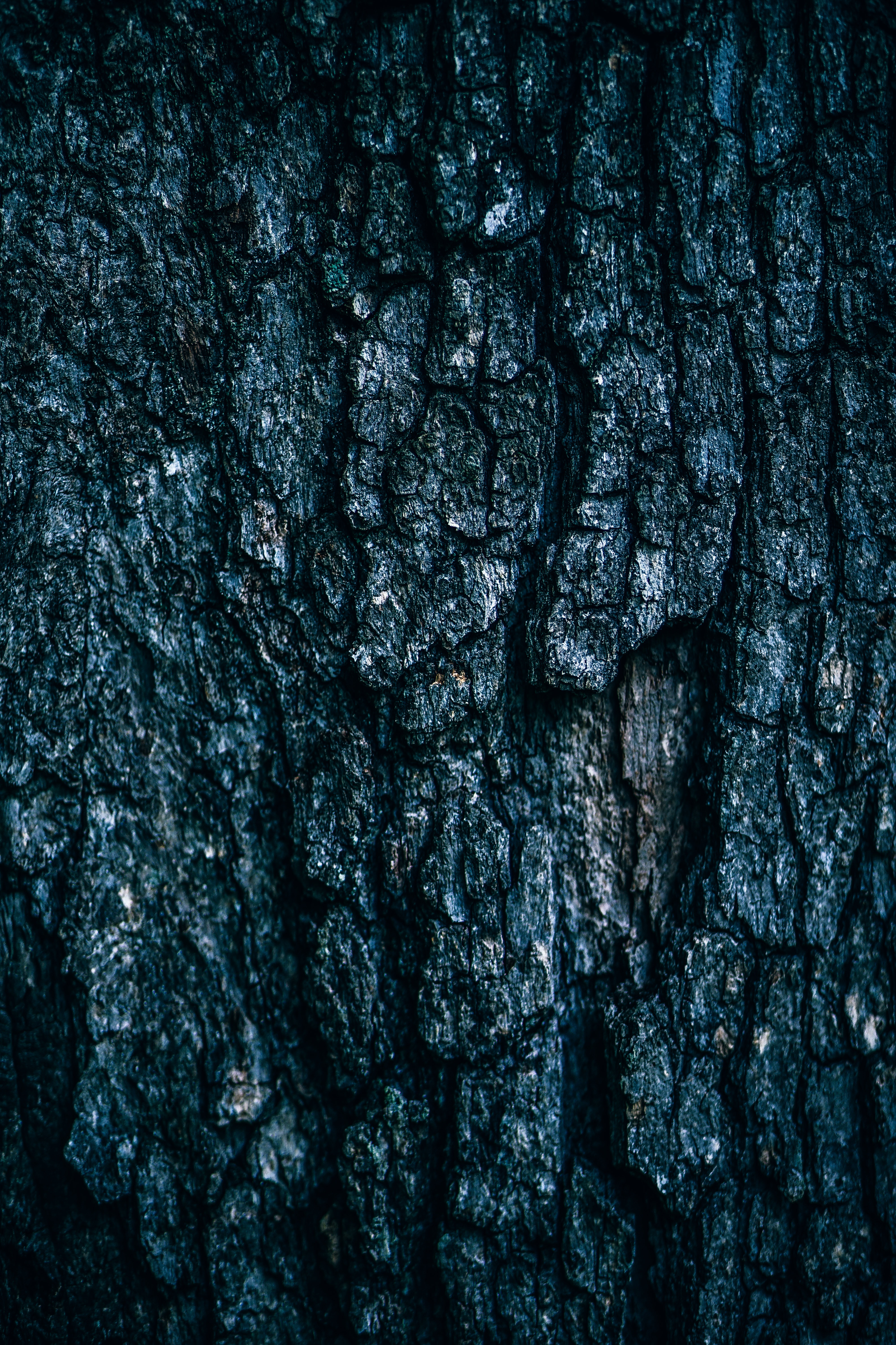 A close-up of tree bark texture.