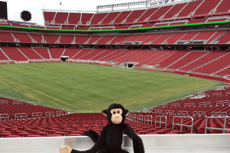 Monkey at the field