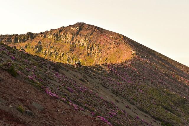 高千穂峰 御鉢とミヤマキリシマ
