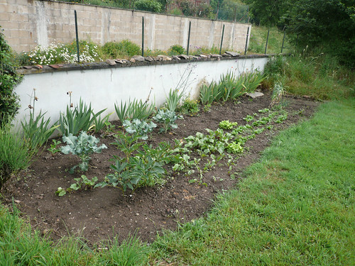 Weeded potager