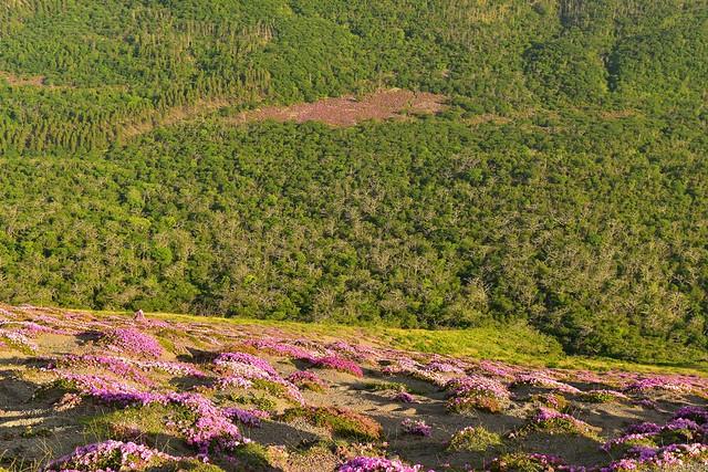 高千穂峰の御鉢から見下ろす鹿ヶ原