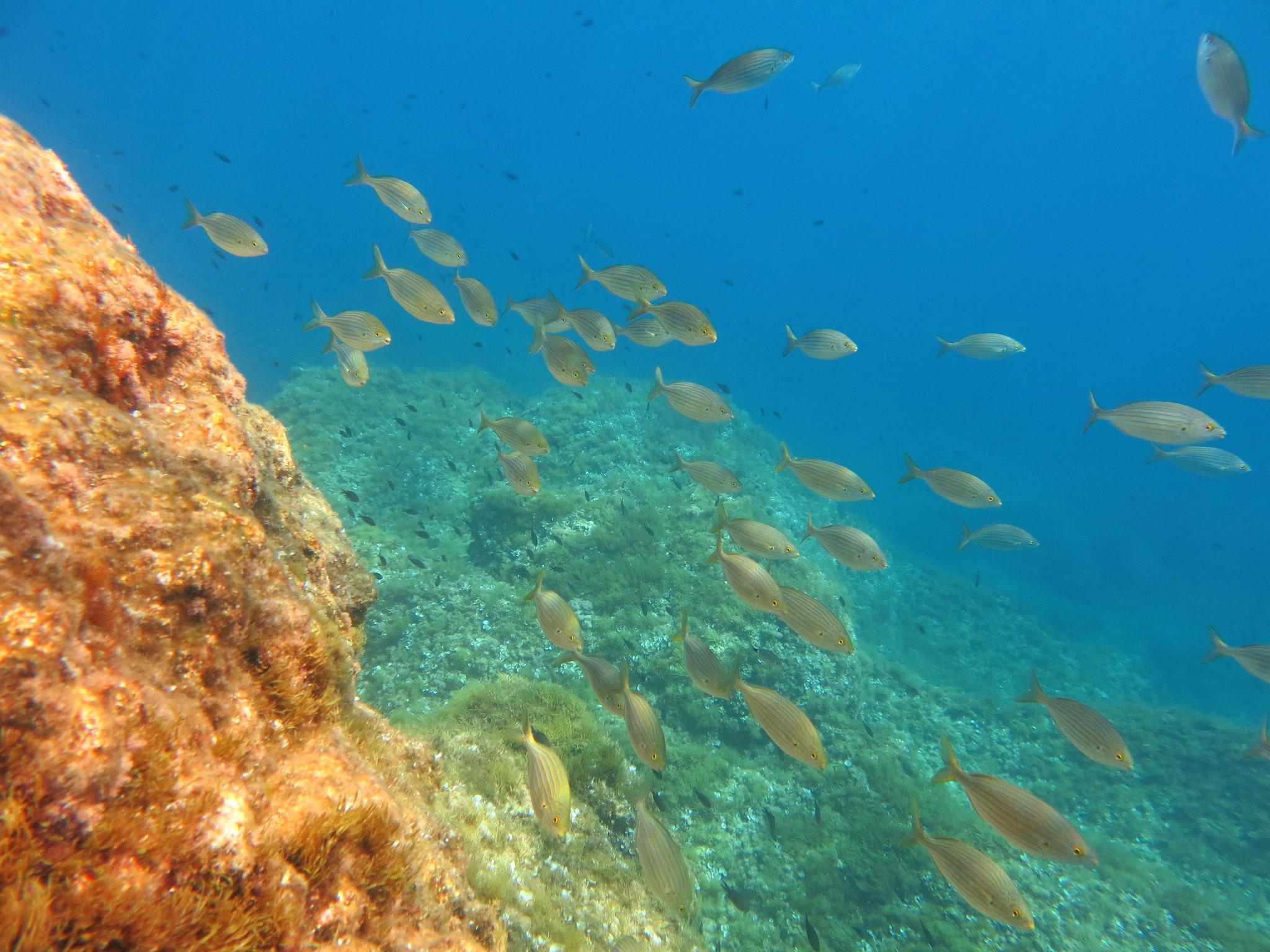 Menorca Underwater Pics 045