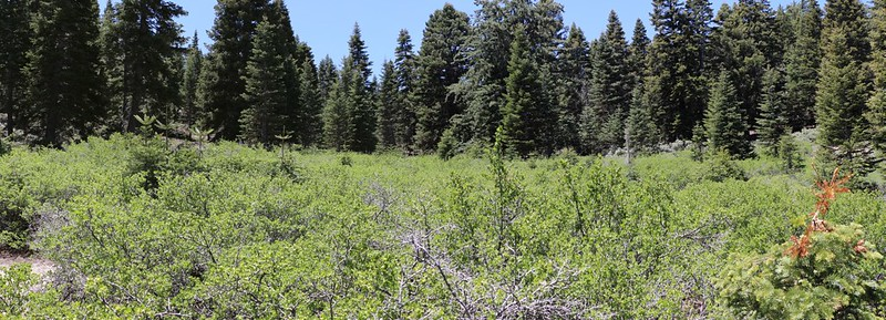 Panorama shot of Gooseberry Meadow on the Fuller Ridge Trail - our campsite is back in those trees