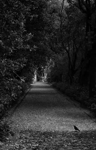 Villa Durazzo Pallavicini: Nel Viale Gotico
