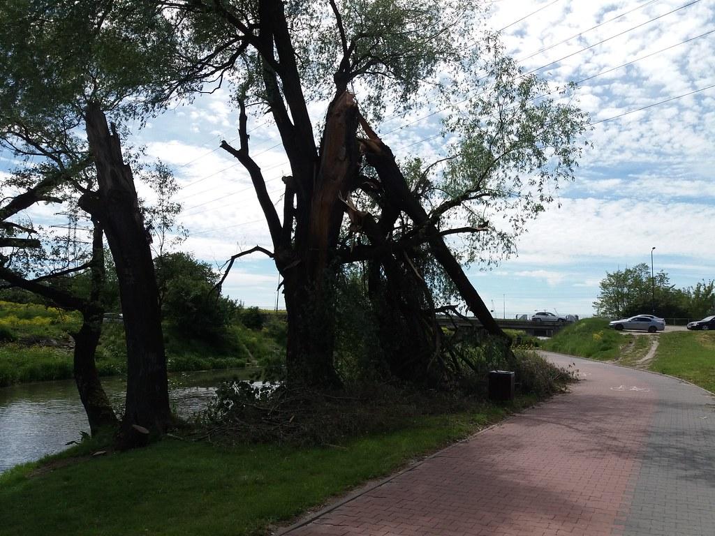 Złamane_drzewo
