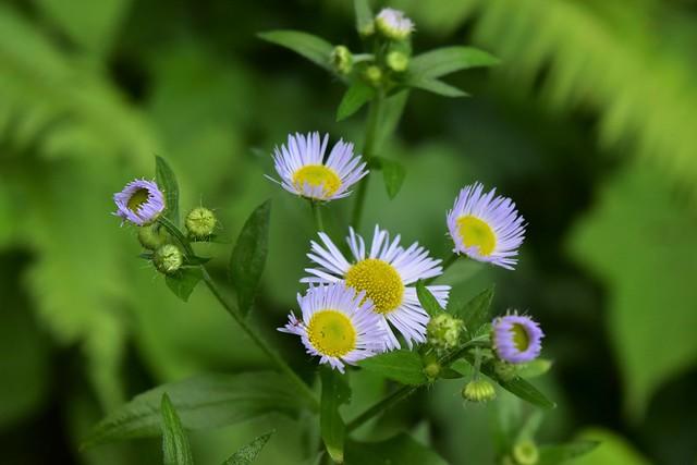 二王子岳に咲いていた花