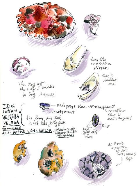 Sketchbook #104: Ocean Shore Treasures