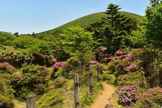 韓国岳避難小屋 庭園のようなお花畑
