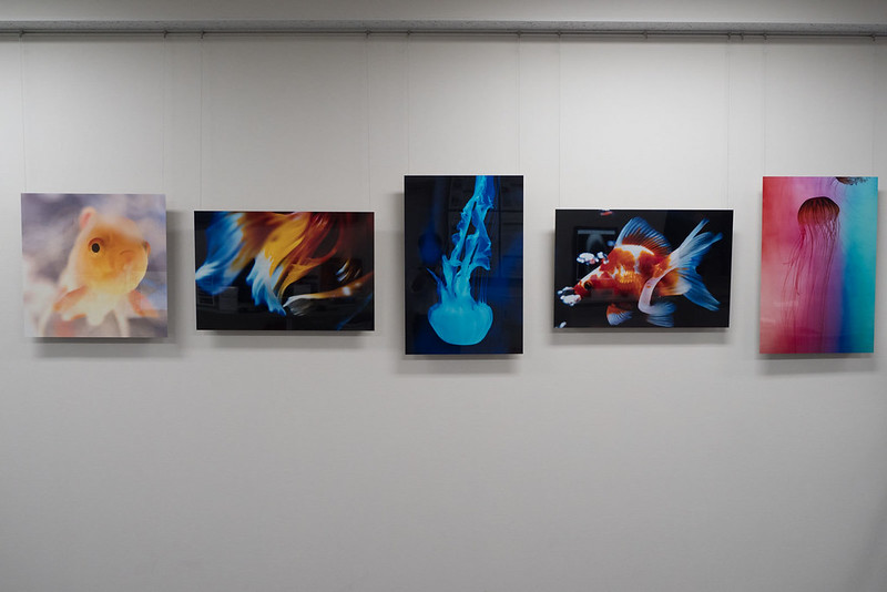 Nana_Misaki_Photo_Exhibition-5