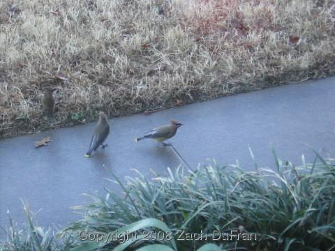 more_birds