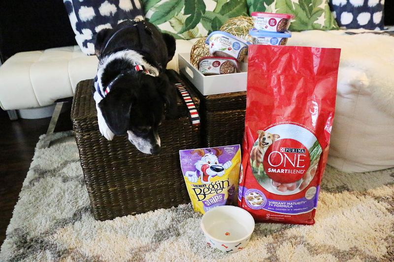 louis-beagle-purina-dog-food-empty-bowl-7