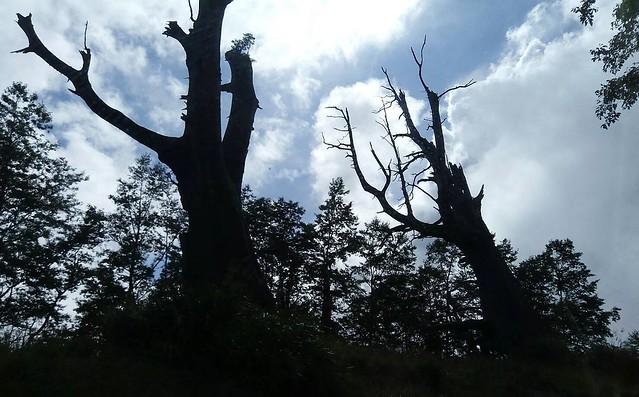 夫妻樹 (3)