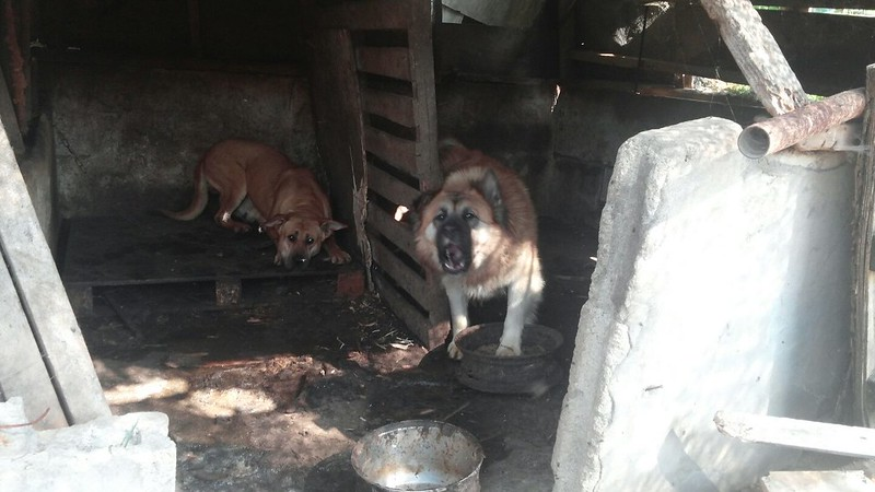 Hell on Earth, Yangsan Sangbuk-myeon Dog Farm.